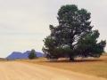 flinders-ranges-10