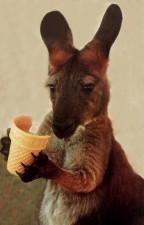klokan s pamlskem - studium angličtiny v Austrálii - Kukabara