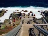 Školní výlet... pozorování lachtanů na Klokaním ostrově