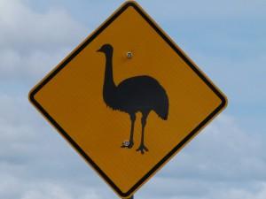 emu se toulá krajinou a  někdy vyrazí i na silnici