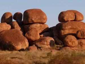 Ďáblovy kuličky opravdu nejsou malé - vlevo vzrostlý eukalyptus jako měřítko.