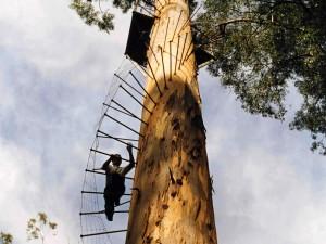 Dave Evans Bicentennial Tree - po šprušlích až na vyhlídkovou plošinu