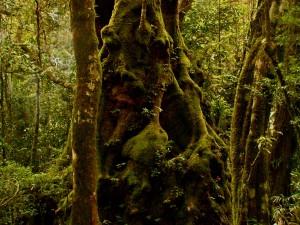 vyjeďte si z Gold Coast do subtropického deštného pralesa