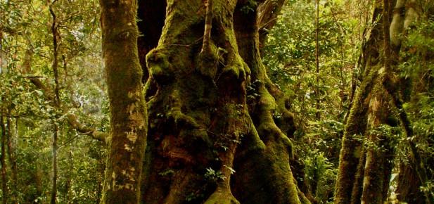 "Queensland - zelené ""moře"" deštného pralesa..."