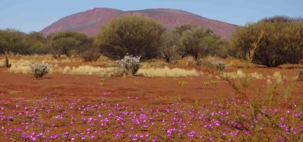 I poušť někdy kvete...