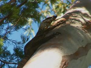 ...i na stromě.