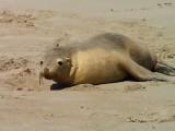 Jen tak se válet v písku...prostě paráda...