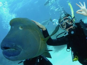 Cairns a potápění - to patří k sobě.