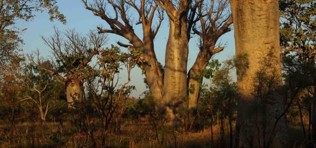 Kimberley - krajina baobabů...