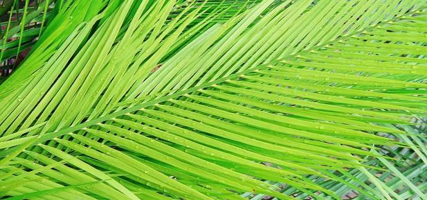 Z Darwinu jste za chvíli v zelených tropech...