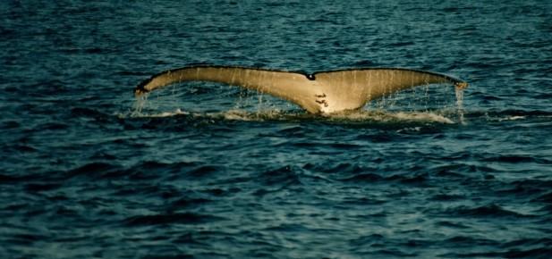V Albany uvidíte víc než jen ocas velryby...