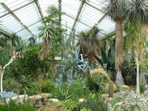 Interiér skleníku Palm House.
