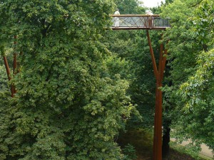 Treetop Walkway - procházka korunami stromů...
