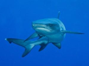 Chápu, že si raději zaplavete s kolegou žralokem obrovským než se mnou...