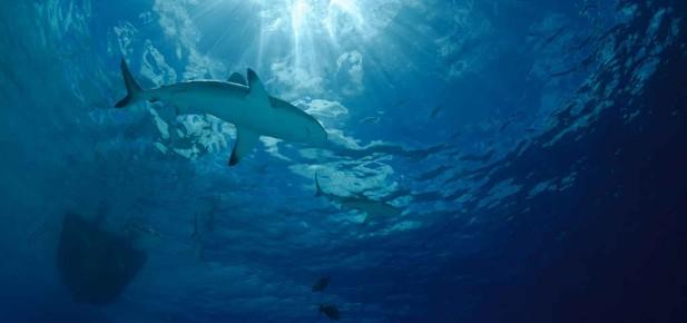 Žralok - nejznámější nebezpečí australských moří...