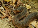 Australští hadi si svou špatnou pověst tak úplně nezaslouží...
