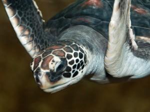 Vodní želva - krása a elegance...