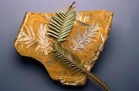 Mezi větvičkami je propastný rozdíl 200 miliónů let.