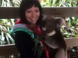 Pochovejte si koalu přímo v Austrálii