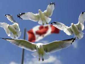 Kukabara vědomostní kvíz na téma Kanada