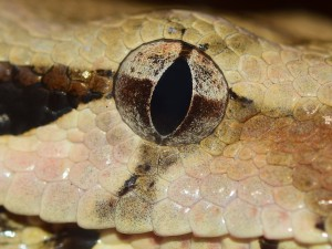 Hadí záhady už čekají...