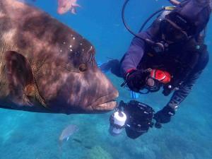 Nebojte se potápění - setkání třeba s kanicem stojí za to!