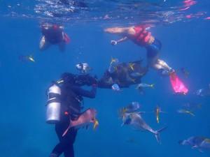 Cairns a potápění - to patří k sobě