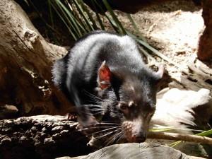 tasmansky - cert - kviz